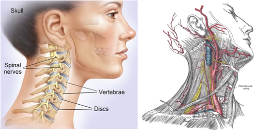 Neck Physiotherapy Treatment Pivotal Motion Physiotherapy